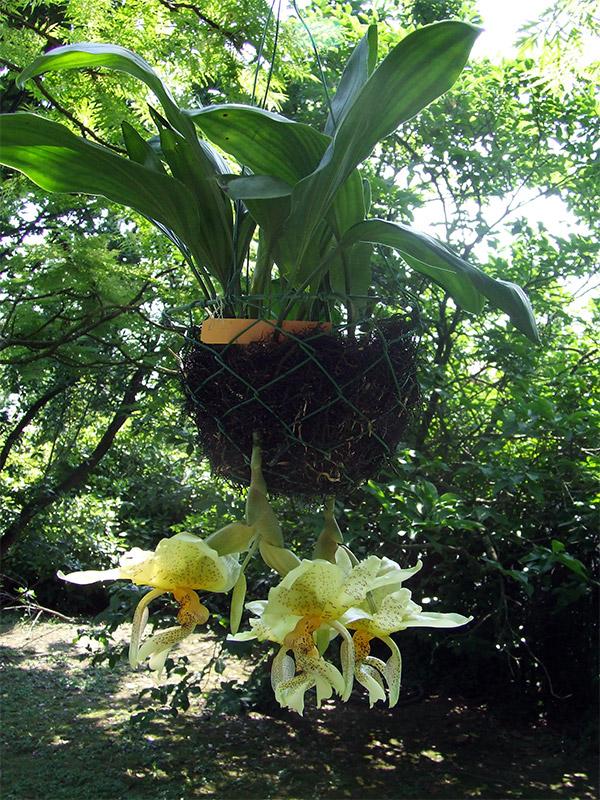 Arriva l estate orchidee fuori e le vacanze - Orchidee da esterno ...