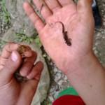 Salamanders and crawfish