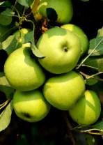 La Manzana Verde Natural Orgánica Granny Smith