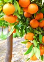 La Mandarina Orgánica