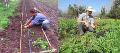 sabores-del-monte-wwoofering-facebook-el-monte-santiago-chile-organic-farm