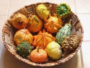 decorative-squashes-895271_640