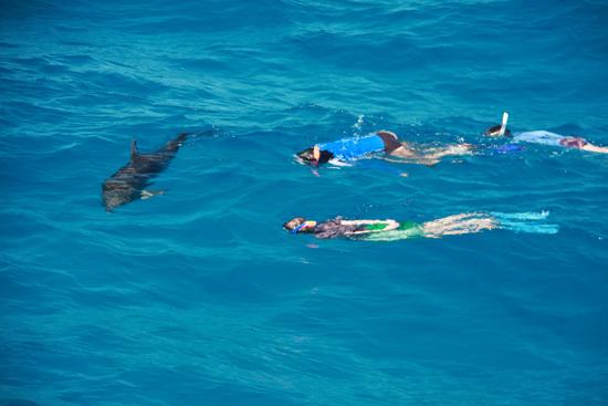 040-wildquest-dolphins