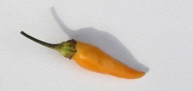 Hot Chillies 3