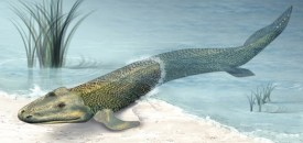 The Devonian Period, the age of the fish