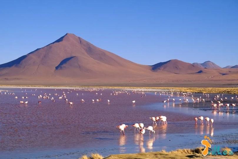 03 - lagunas altiplanicas - bolivia-1