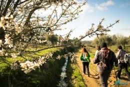 Caminhada-Amendoeira-Flor-17