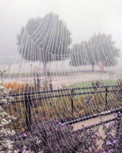 zoo spider web