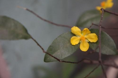 Tet Flowers