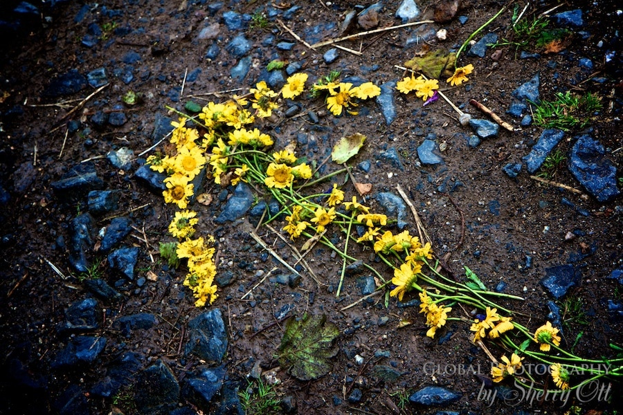 arrow made of flowers on the trail