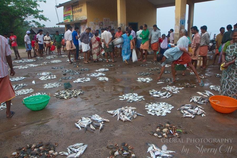 fish auction india