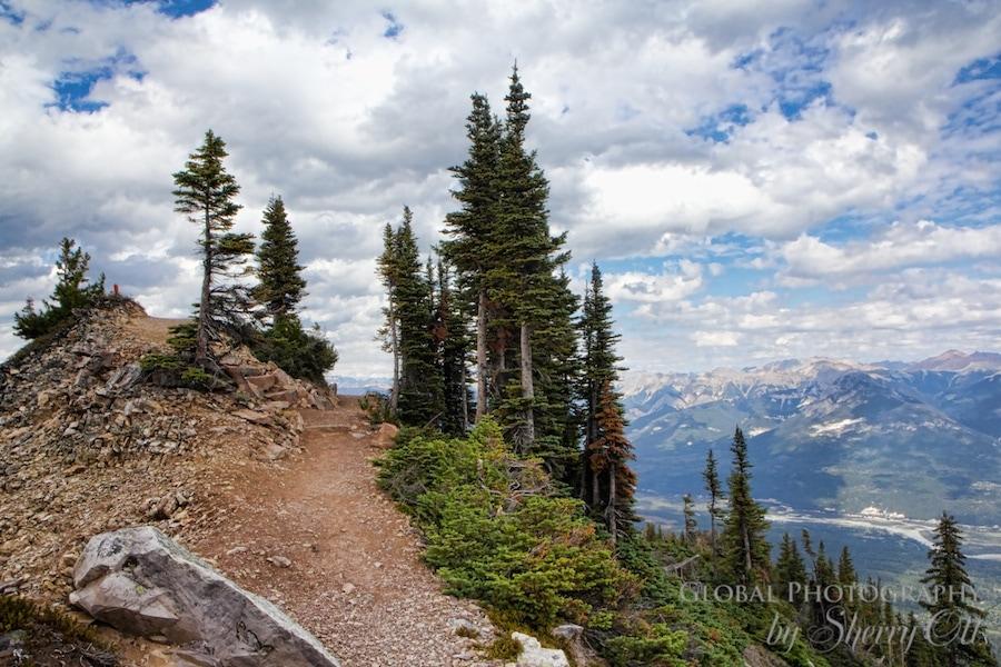 Hiking Kicking Horse Mountain