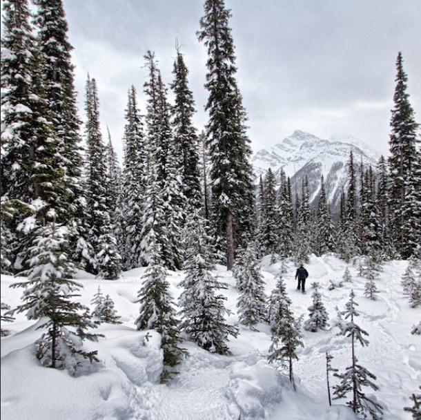 snowshoeing canmore