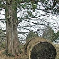 The round bale hay experiment - Part 3