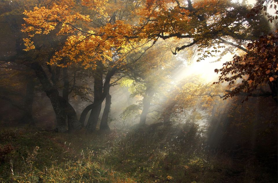 Fall Scenery Wallpaper Fog Landscape Photos Landscapes With A Soul