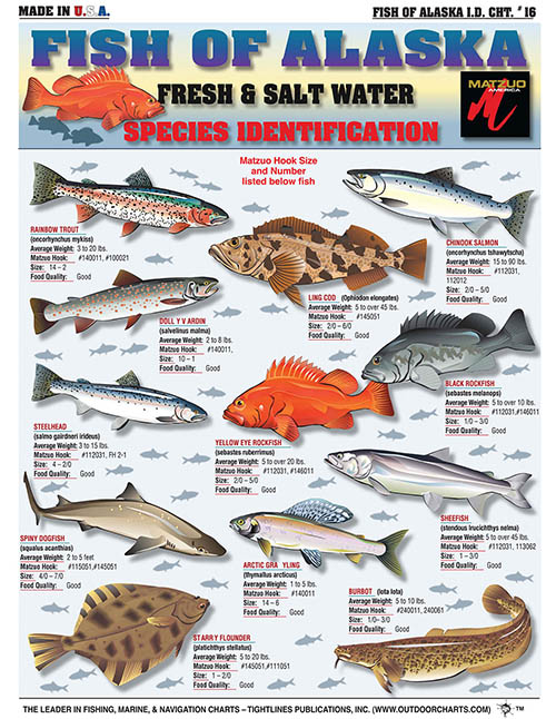 Saltwater Fishing Charts and Saltwater Fish Identification Charts