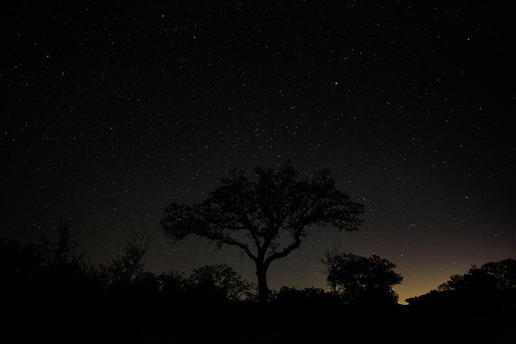 Night-Tree