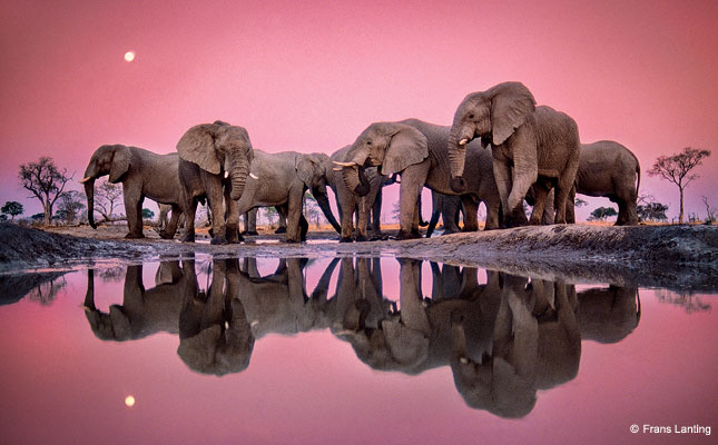 Cute Pink Elephant Wallpapers Frans Lanting Photography Outdoor Photographer