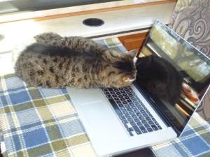 Whisper Hard At Work At The Computer