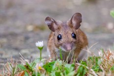 Mouse_20170711_79317