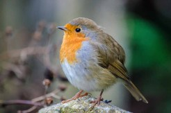 About Out to Grass Photography - Robin