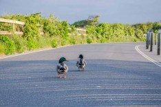 Whats up ducks! A couple of ducks enjoying the peace and quiet of the closed road around Titchfield Haven