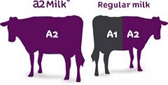 a2-milk-cows