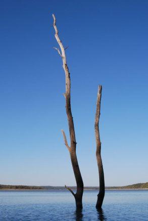Dead trees in Harry S Truman Lake, Missouri