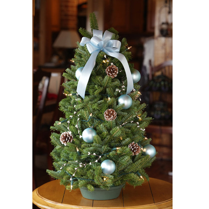 Tabletop Christmas Trees Design \u2014 OZ Visuals Design  Ideas to