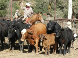 Ventura County rancher Bud Sloan is still herding cattle after more than a decade in the industry. (Courtesy photo)