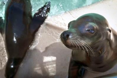 SeaWorld11 05-15-12 lo-res