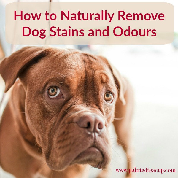How to Naturally Remove Dog Stains and Odours