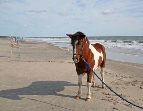assateague island trip