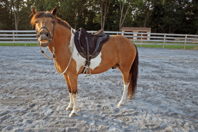 boomerang in treeless saddle