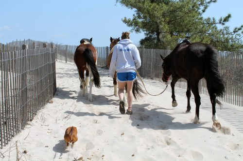 cape henlopen beach ride - painting pony