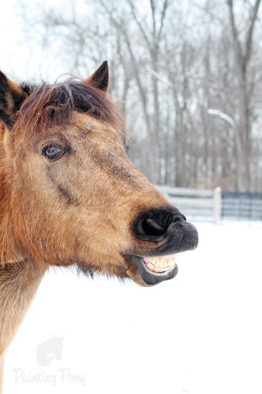 Snow Pony // Painting Pony