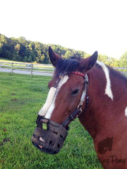 How to REALLY Keep a Muzzle on your Horse // Painting Pony