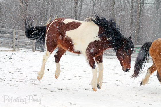 Chincoteague Ponies in the Snow // Painting Pony