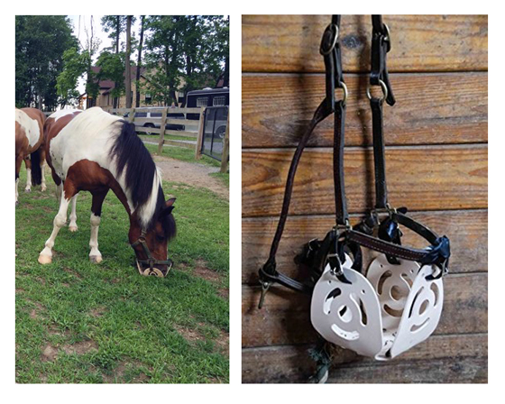 How to Choose the Best Grazing Muzzle for Your Horse