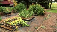 Pallet Vegetable Garden | Pallet Ideas: Recycled ...