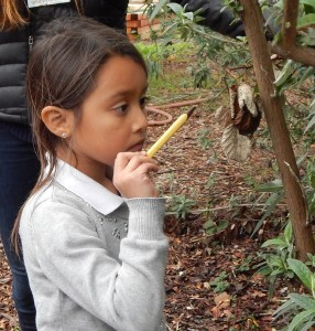 "EPACS student observes a tree during ""Schoolyard Snoop."" Photo by Kristi Moos, EV"