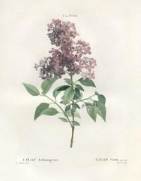 Vintage Botanical Prints   www.imgkid.com - The Image Kid ...