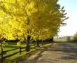 Papel de Parede Árvore no Outono