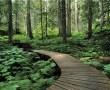 Papel de Parede Caminho na Floresta