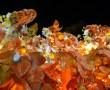 Papel de Parede Carnaval [5]