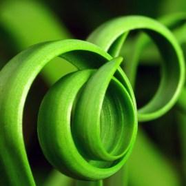 Papel de parede 'Espirais verdes naturais'