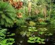 Papel de Parede Jardim Botânico – Hawaii