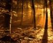 Papel de Parede Luz na floresta