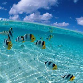 Papel de parede 'Mar com peixes'