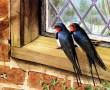 Papel de Parede Pássaros – Na Janela